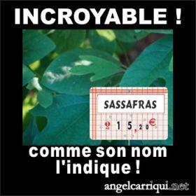 118 sassafras
